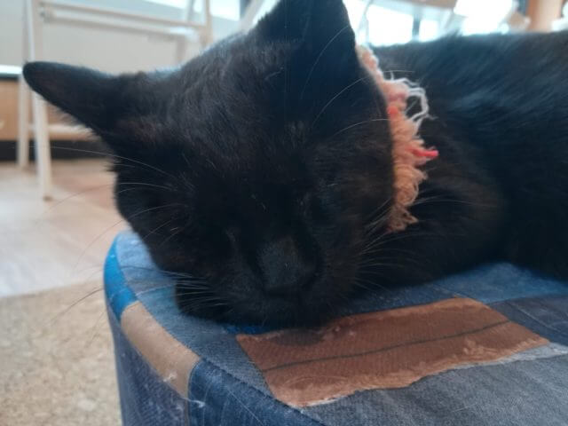 ねこかつ,保護猫カフェ